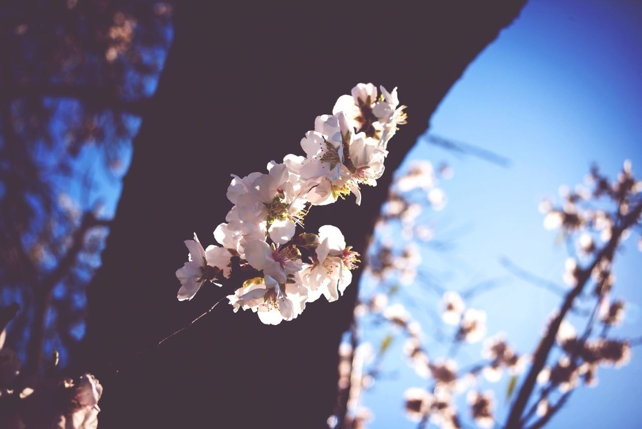 Beautiful stock photos of cherry, Beauty In Nature, Branch, Cherry Blossom, Clear Sky