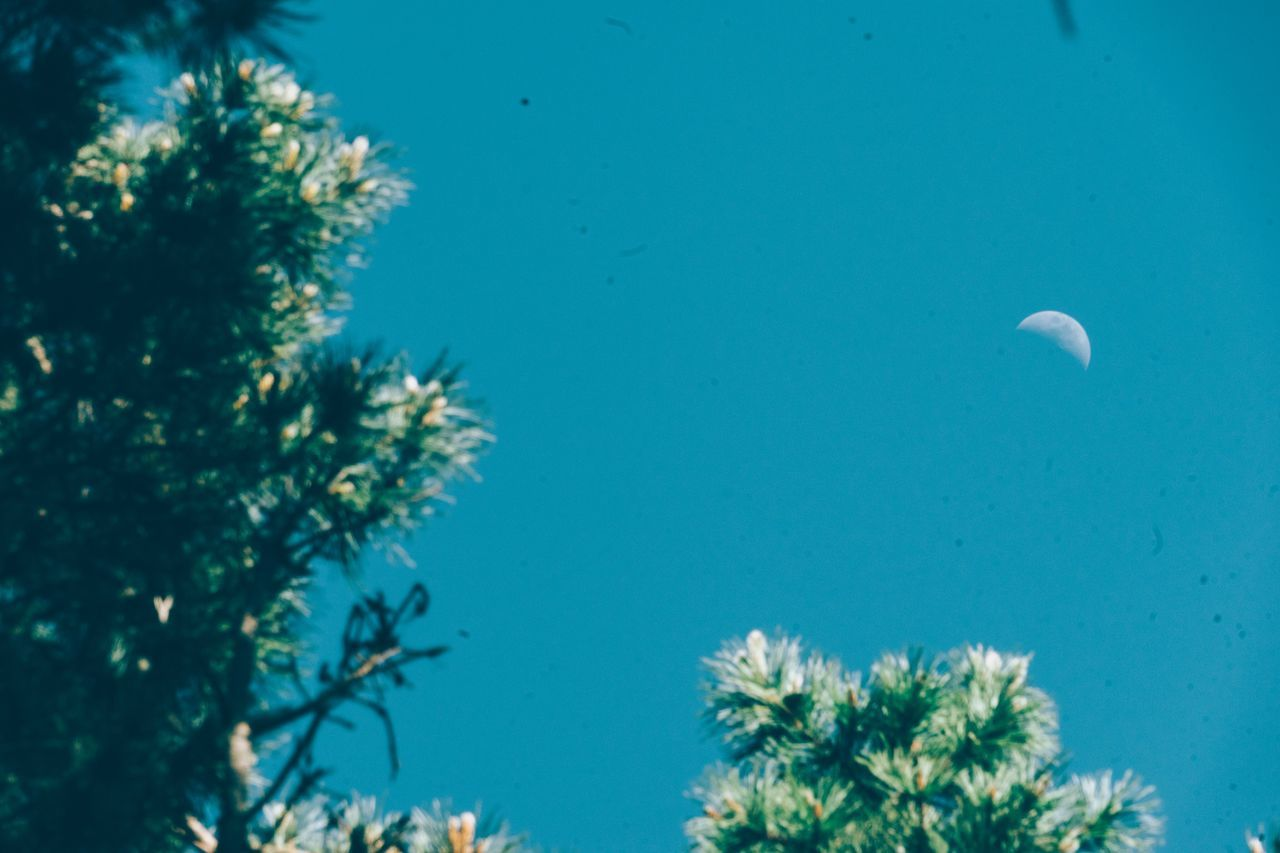 Rural Poetry Nature No People Beauty In Nature Growth Tree Day Blue Clear Sky Moon Outdoors Sky Close-up