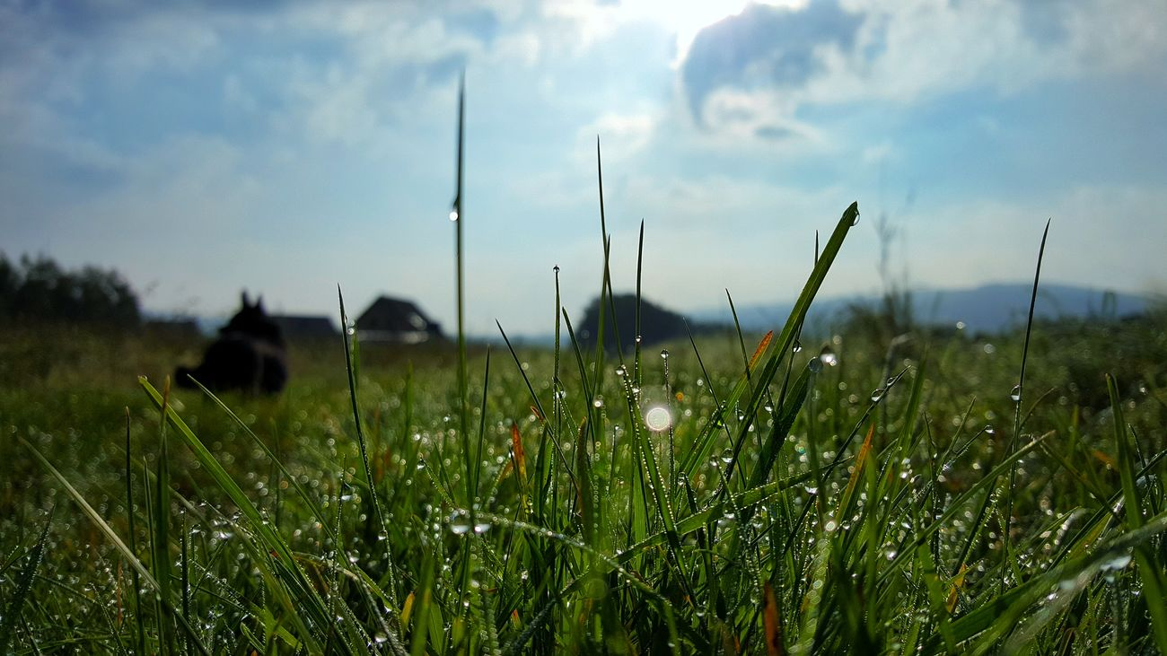 Beauty In Nature Close-up Cloud - Sky Day Dew Dog Field Grass Growth Landscape Nature No People Outdoors Plant Poland Rural Scene Sky Summertime Tranquil Scene Tranquility