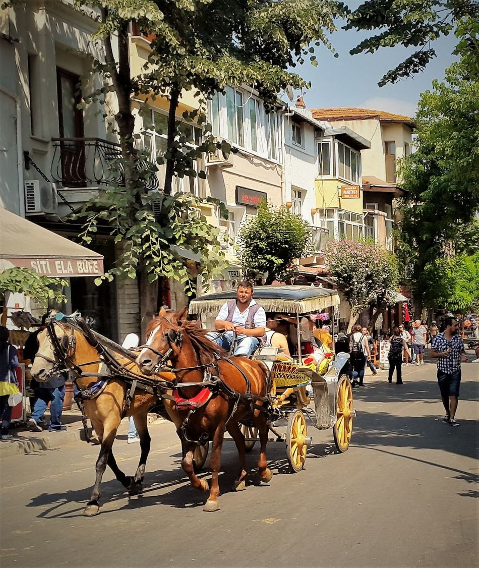 Phaeton tour buyuk Ada , istanbul Turkey Architecture Building Exterior Built Structure City Competition Day Domestic Animals Fayton Group Of People Horse Horse Cart Horsedrawn Mammal Men Outdoors People Real People Street Tree Working Animal