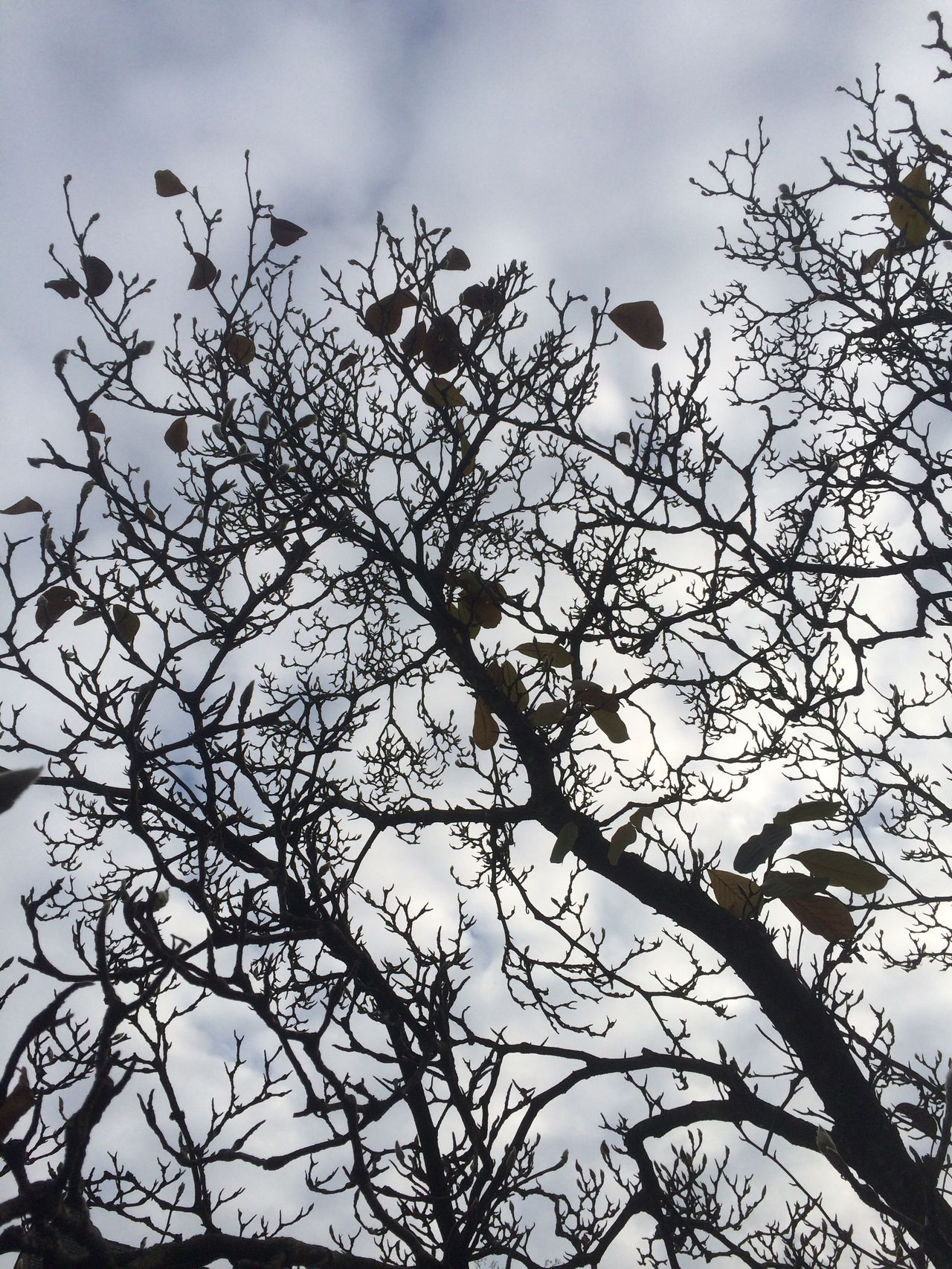 Tree Low Angle View Last Leaves Sky Nature No People Beauty In Nature Day