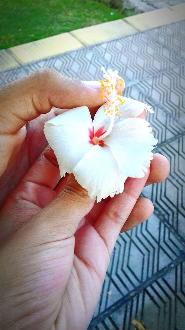 Flor Flores Nature Photography Oceanographic Paz ✌ Photo Paisajes Naturales. First Eyeem Photo Amor Amoreterno Lovelovelove Lovely Weather Love To Take Photos ❤
