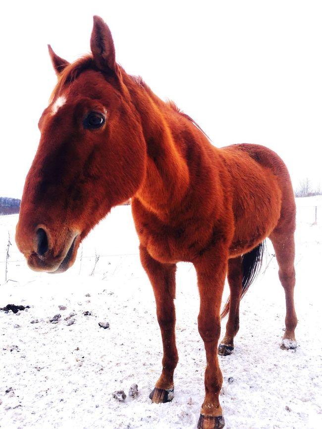 Horse Photography  Domestic Animals Horse Polo Horses  Horse Riding My Horse Horses I Love Horses Horse Life