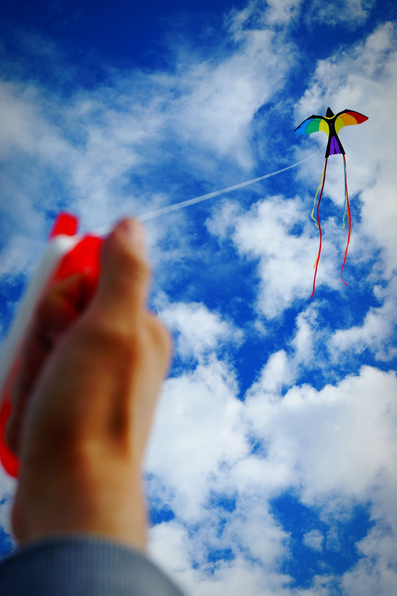 Beautiful stock photos of friedenstaube, Cloud - Sky, Day, Flying, Focus On Background