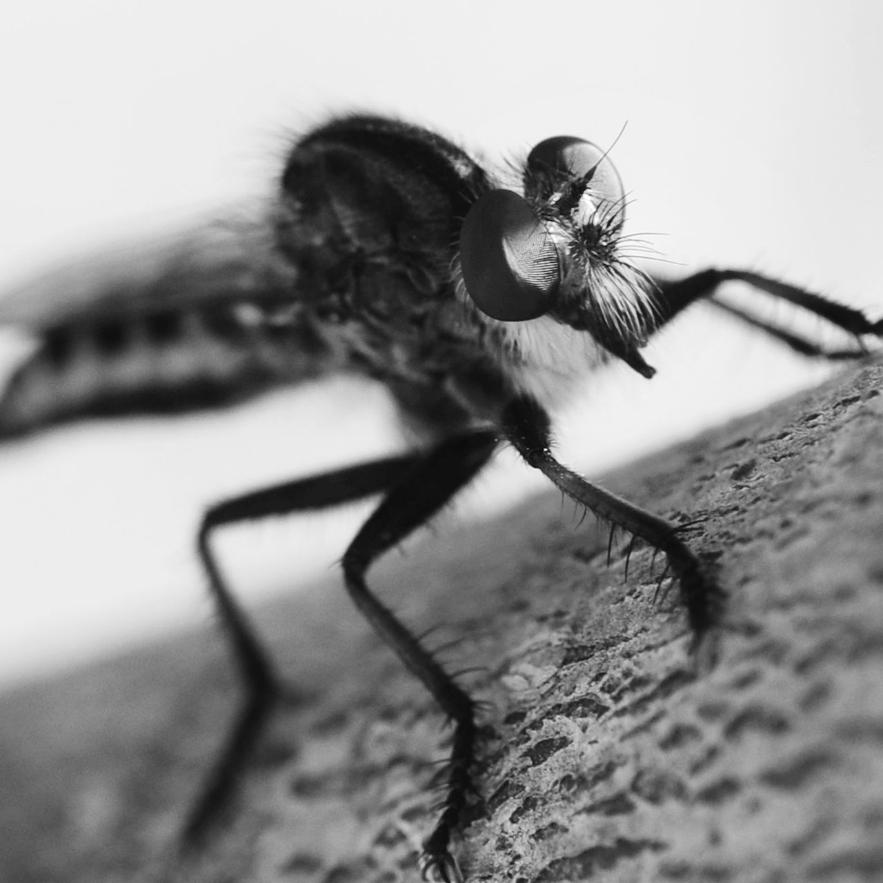 One Animal Insect Animal Themes Animals In The Wild Close-up Animal Wildlife Day No People Outdoors Perching Nature Eyeemphotography Black And White Collection! Black & White Photography EyeEm Gallery Black&white Texas Photographer Blackandwhite Photography Macro Insects Macrophotography Black And White Collection