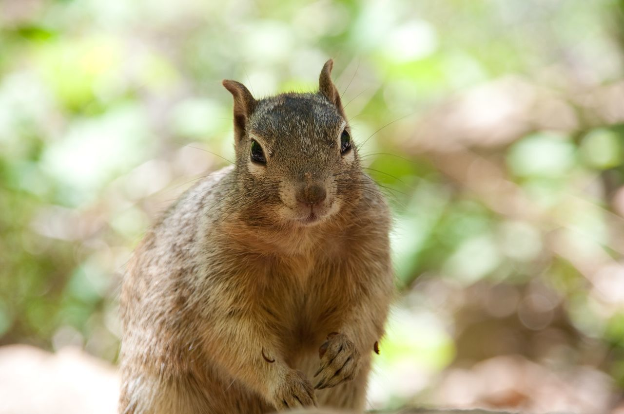 Squirrel in Zion National Park Utah Nature Animals Closeup Nature's Diversities