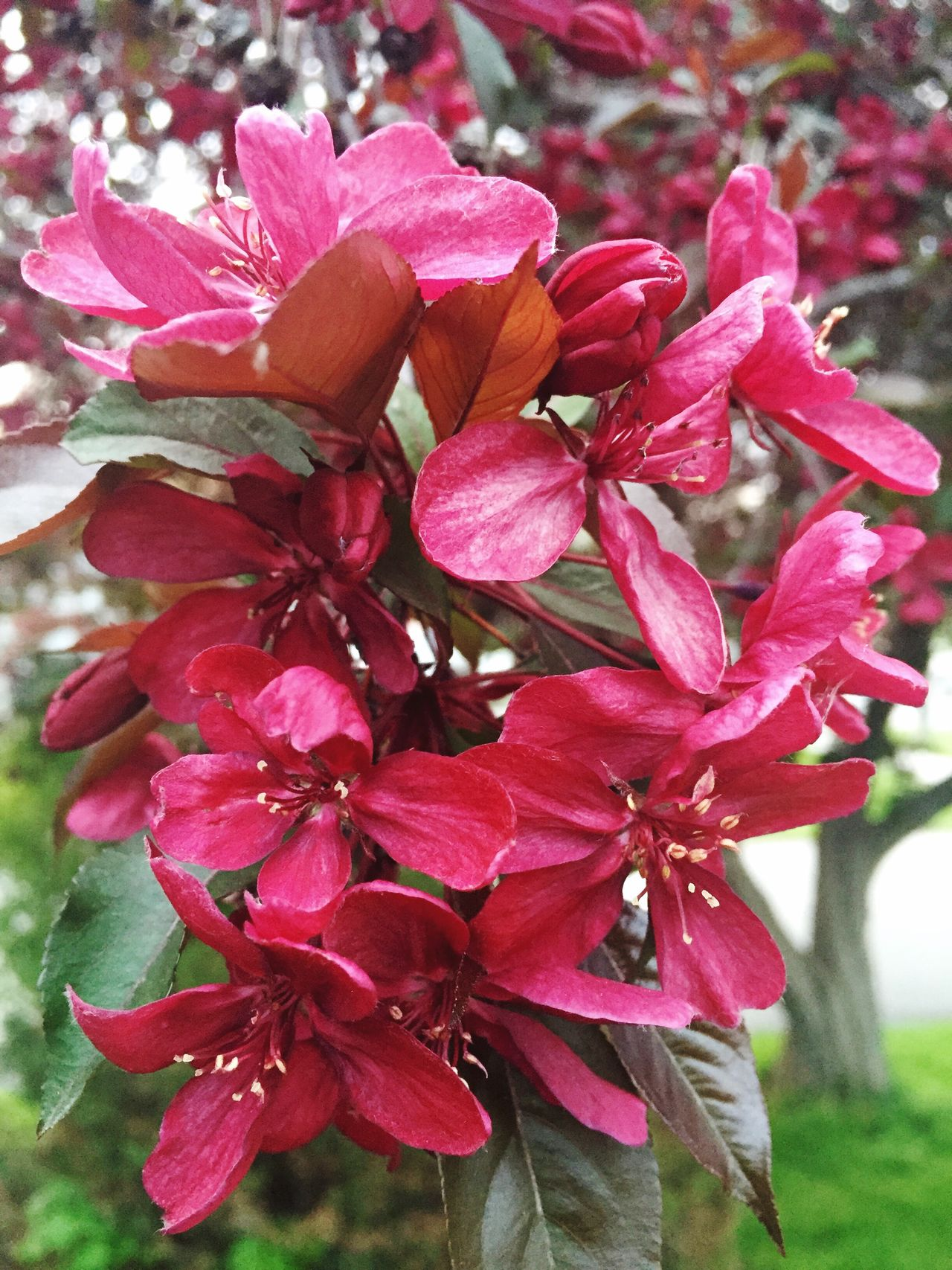 Red flowers Flowers tree flowers Spring Day summer Growing nature Life grow Outside outside photography