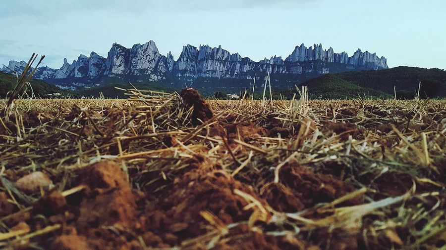 Agriculture Nature Field Mountain No People Outdoors Rural Scene Scenics Beauty In Nature Sky Sant Ignasi De Loyola Camiignasià Mountain_collection Montserrat Catalunya Montserratlovers Walking Landscape_Collection Growth Day Tree Close-up