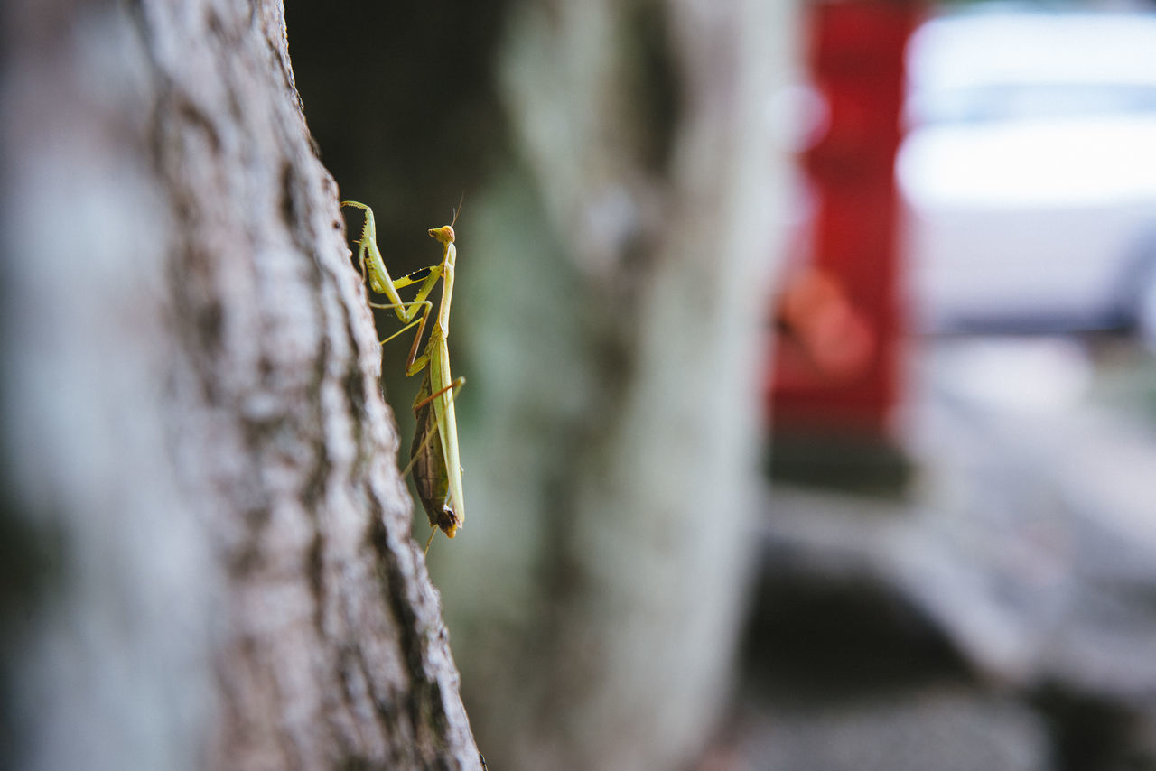 Animal Themes Animal Wildlife Animals In The Wild Ant Calm Close-up Day Focus Insect Nature Nature No People One Animal Outdoors Pray Praying Mantis Zen