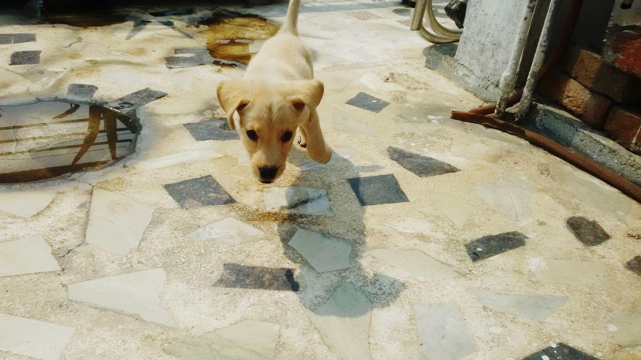 I Can Fly🙌 Cheenu So Cute Sprint Jump Pup