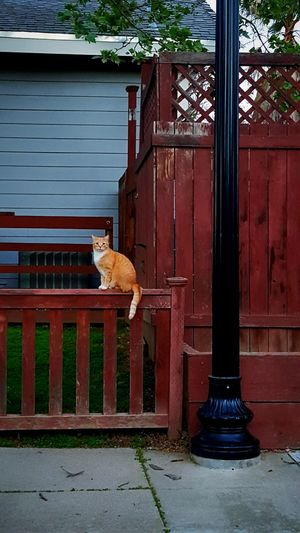 Taking Photos Hello World Cheese! Relaxing Hi! Enjoying Life Cat Geometry Cats Kitty Lamppost Taking Photos Photography Orange Black Lantern Pastel Cat Watching Brown Suburbs Cat Lovers Reds Gray Cheese! Geometric Shapes