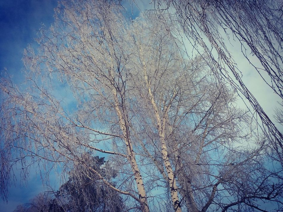 Trees Blue Sky Amazing View Phonephotography📱 Morning Landscape Snow ❄ White Cold Temperature Forest Taking Photos No People Beauty In Nature Freezingweather