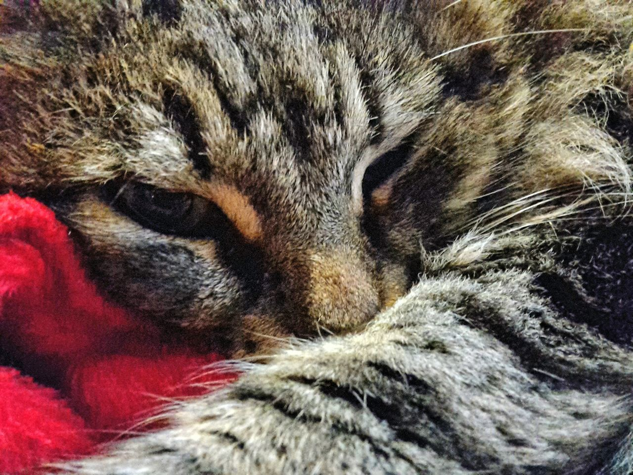 animal themes, one animal, pets, domestic cat, domestic animals, close-up, feline, no people, whisker, mammal, indoors, day, nature