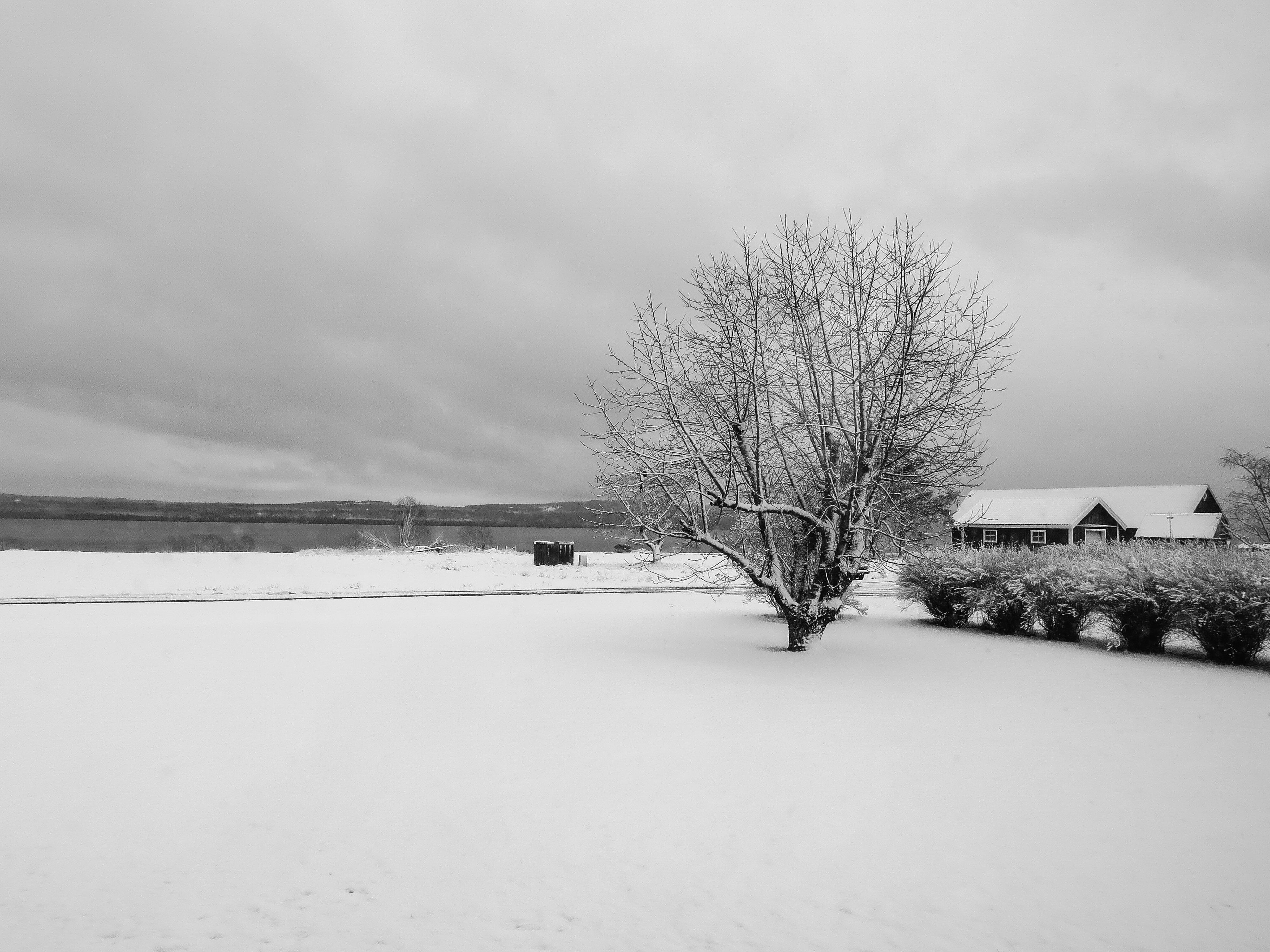 sky, tree, built structure, field, weather, architecture, landscape, nature, winter, cloud - sky, tranquility, snow, building exterior, cold temperature, growth, tranquil scene, bare tree, day, overcast, house