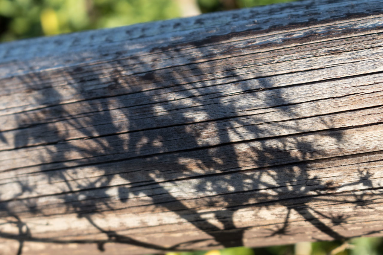 Light And Shadow Eye4photography  EyeEm EyeEm Best Shots EyeEmBestPics Plant Shadow Minimalobsession Minimal Minimalism Close-up Wooden Log Wood From My Point Of View EyeEm Gallery Taking Photos Portugal