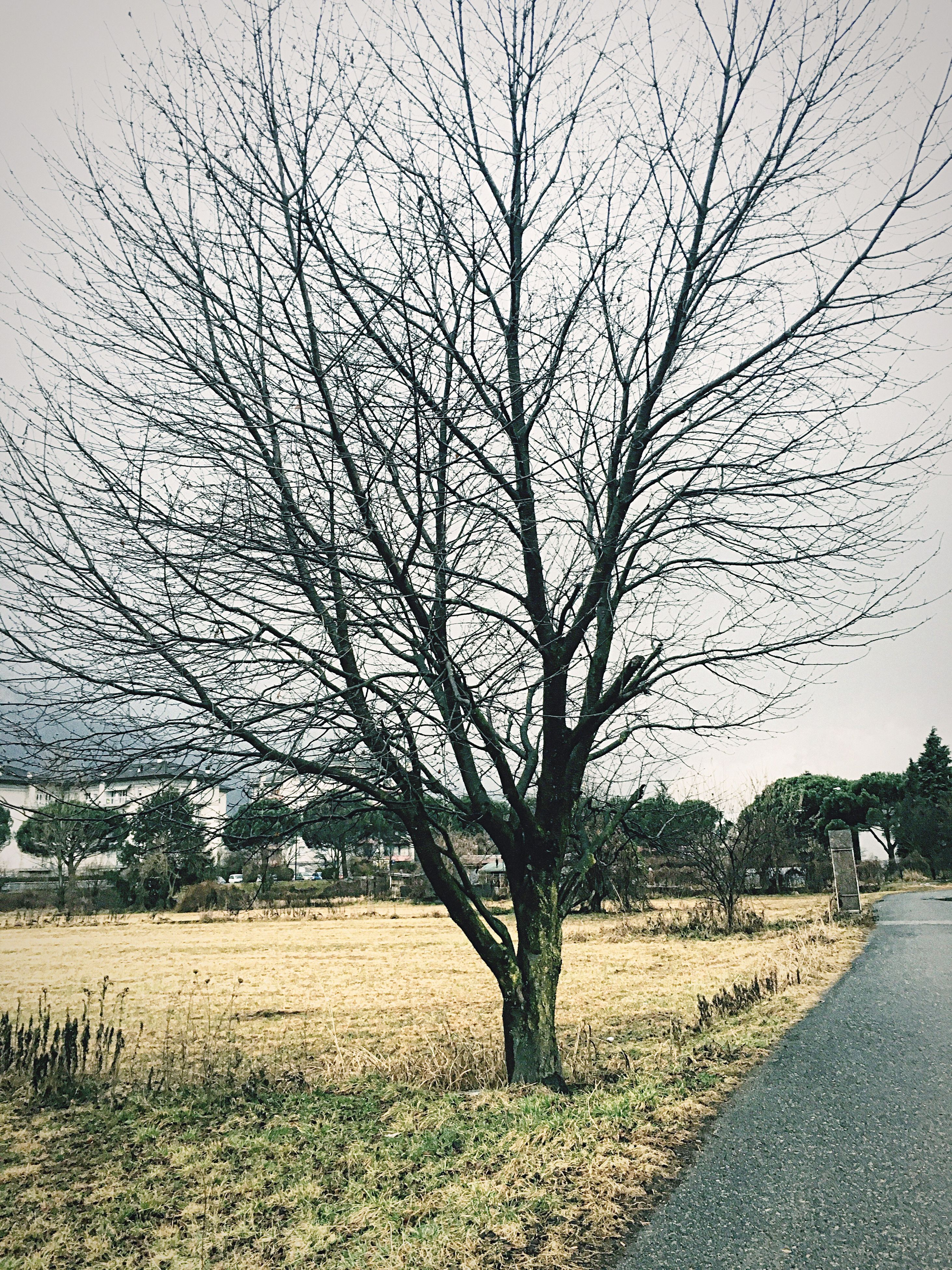 bare tree, tree, branch, tranquility, tranquil scene, field, road, nature, landscape, scenics, transportation, sky, tree trunk, beauty in nature, the way forward, grass, growth, day, outdoors, no people