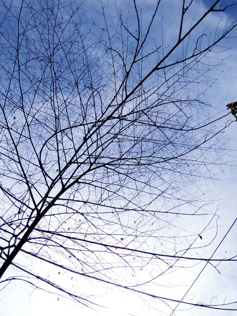 bare tree, branch, sky, low angle view, nature, tree, no people, day, outdoors, cable, beauty in nature, clear sky, animal themes