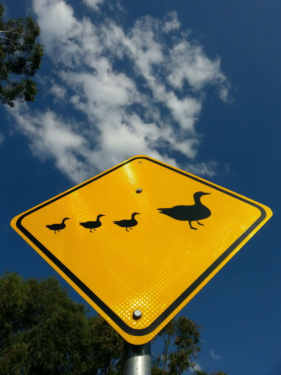 over the hills Blue Sky Bright Sunshine Cloud - Sky Communication Day Diamond Shaped Drive Carefully Duck Ducklings Ducks Mother Duck PhonePhotography Road Sign Semiotics Sign Signs Signstalkers Silhouette Sky Smartphonephotography Street Sign Street Signage Street Signs The Purist (no Edit, No Filter) Yellow