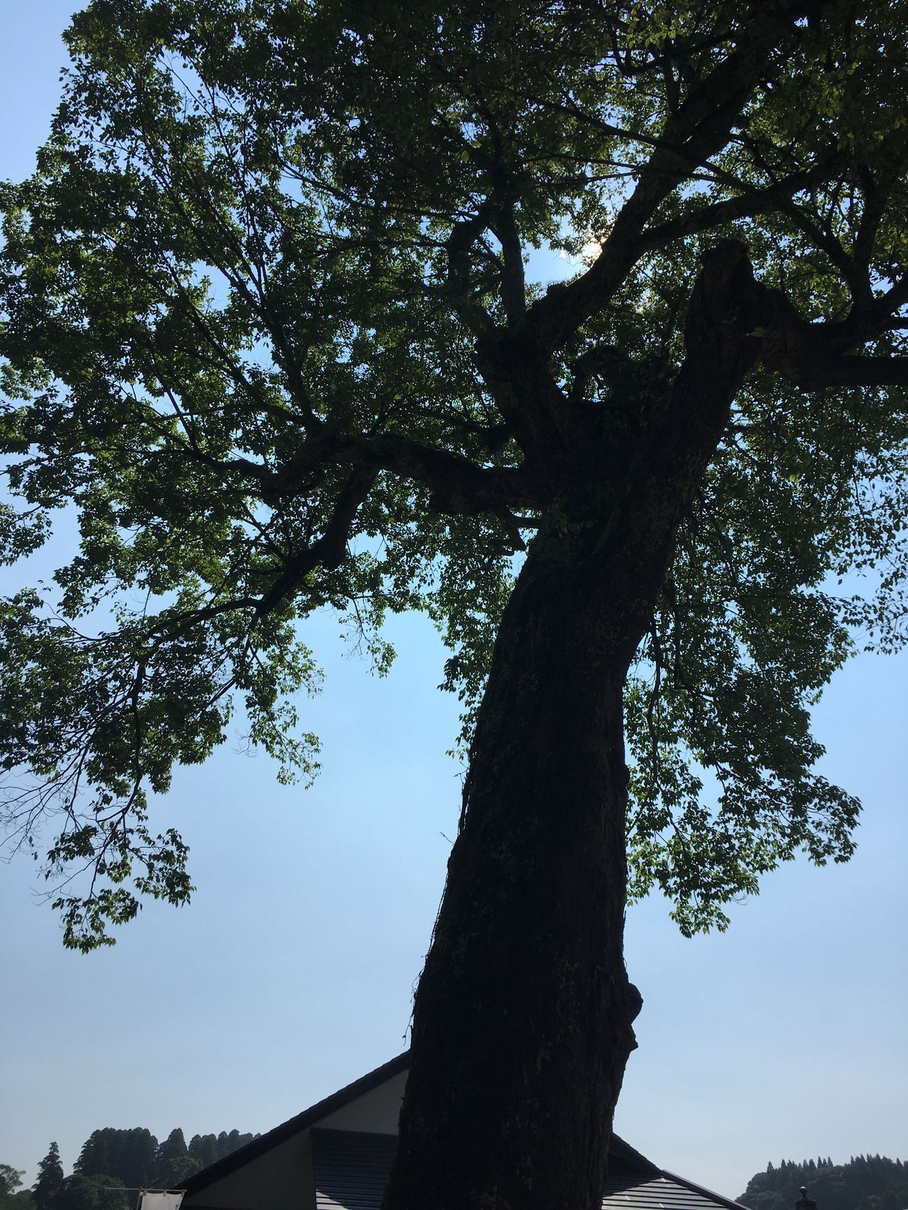 Tree Tree_collection  Sky Sunshine Summer