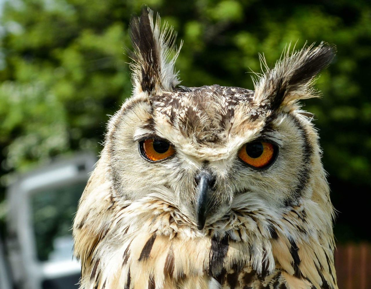 One Animal Owl Animal Themes Animal Bird Outdoors Day Close-up Nature Beautifull Cute Loveit NaturePictureoftheday Brown Beauty In Nature Picutre Owl Photography Owl Eyes First Eyeem Photo EyeEmNewHere EyeEmNewHere