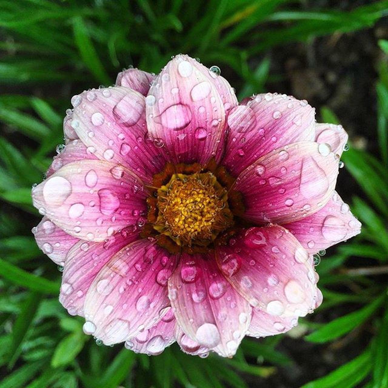 Thanks to @nadiaulfaekaputri untuk liburan yang pendek dan tergesa untuk kesekian kali bersama aku dan @astrinrfjrn Selalu ada kejadian-kejadian absurd, cekcok sana sini, galau kemana-mana, menerjang hujan dan badai tapi selalu senang dan kanker pada akhirnya Jj_indetail Nothingisordinary_ 9vaga_flowersart9 9vaga_fl_pink9 9vaga_colorpink9