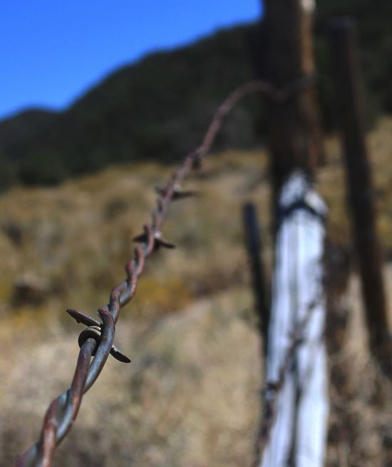 Focus On Foreground Barbed Wire Outdoors Metal Day Close-up No People Safety Nature Protection Plant Mountain Sky Western Nevada Strong Dangerous