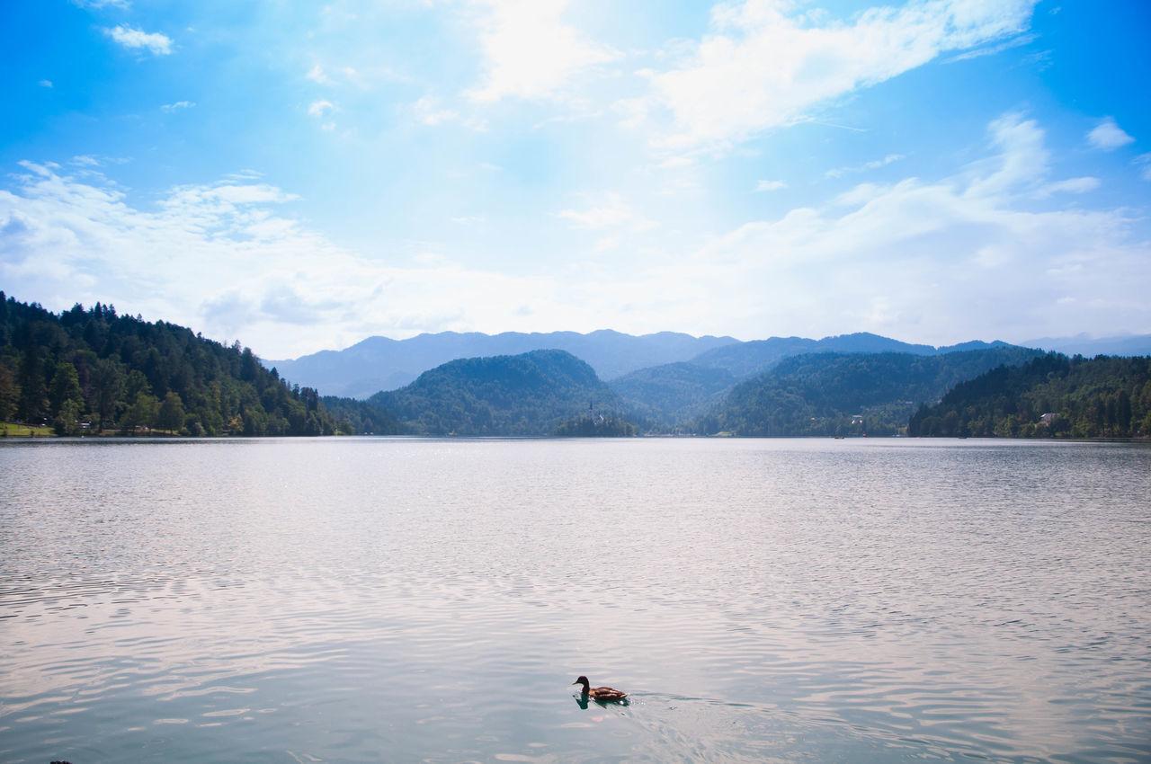 Beautiful stock photos of enten, bird, mountain, cloud - sky, lake