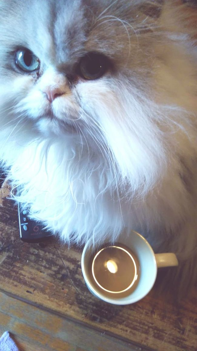 Coffee and cats 👌 Cats Cat Cat Lovers Coffee Relaxing Morning Relax Aesthetic