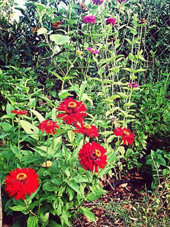 Her çiçek dalında güzeldir...