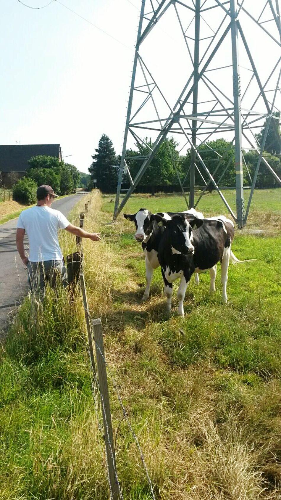 Neue freundliche Kühe kennengelernt. .. der Kuh- flüsterer ;-) in NRW, Germany EyeEm Animal Lover EyeEm Nature Lover Kurzepausedanngehtsweiter Kuhweide From My Point Of View Cows