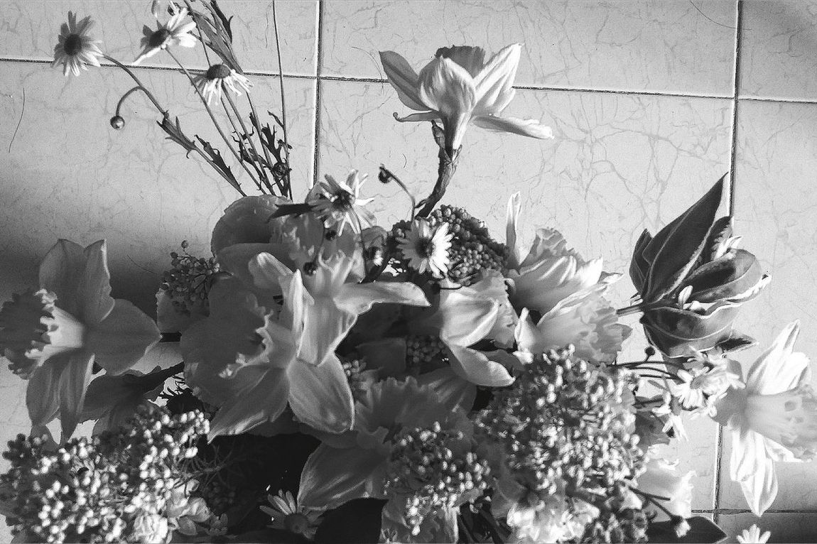 Day 3 in the Tropics Daffodils from The Netherlands Singapore Flowers Nature Bnw Bnw_nature Aerial Shot a third of the bouquet Eyeem Nature EyeEm Gallery Eyeem Spring EyeEm Nature Lover Eyemphotography