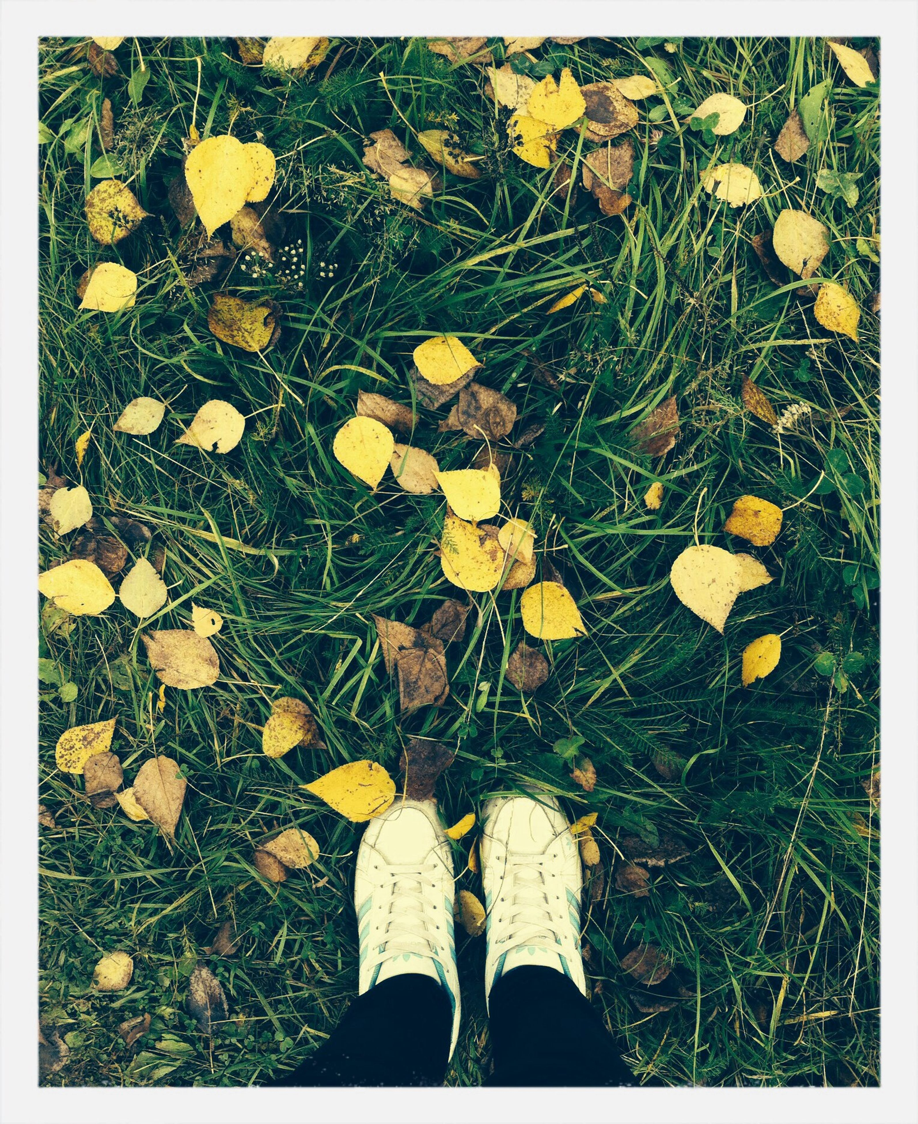 low section, person, grass, shoe, standing, personal perspective, transfer print, high angle view, field, grassy, lifestyles, human foot, auto post production filter, leaf, men, unrecognizable person, leisure activity