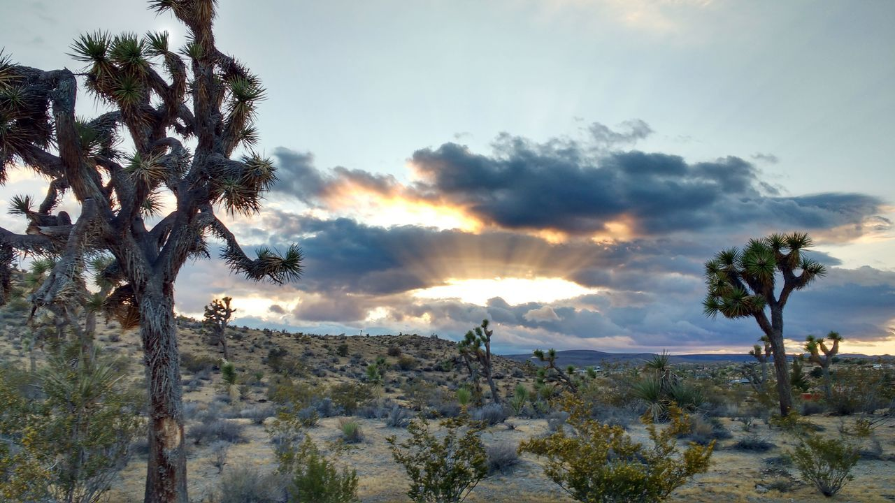 29 Palms, California 29 Palms Sunset Desert California Sky Skyporn Sky And Clouds Cloud Clouds Desert Sky Deserts Around The World Desert Landscape Desert Plants Sunset_collection Sunrise_sunsets_aroundworld California Sunset Desert Sunset Desert Beauty Desert Around The World Plant Cactus Cactus Flower Flower The Great Outdoors - 2016 EyeEm Awards
