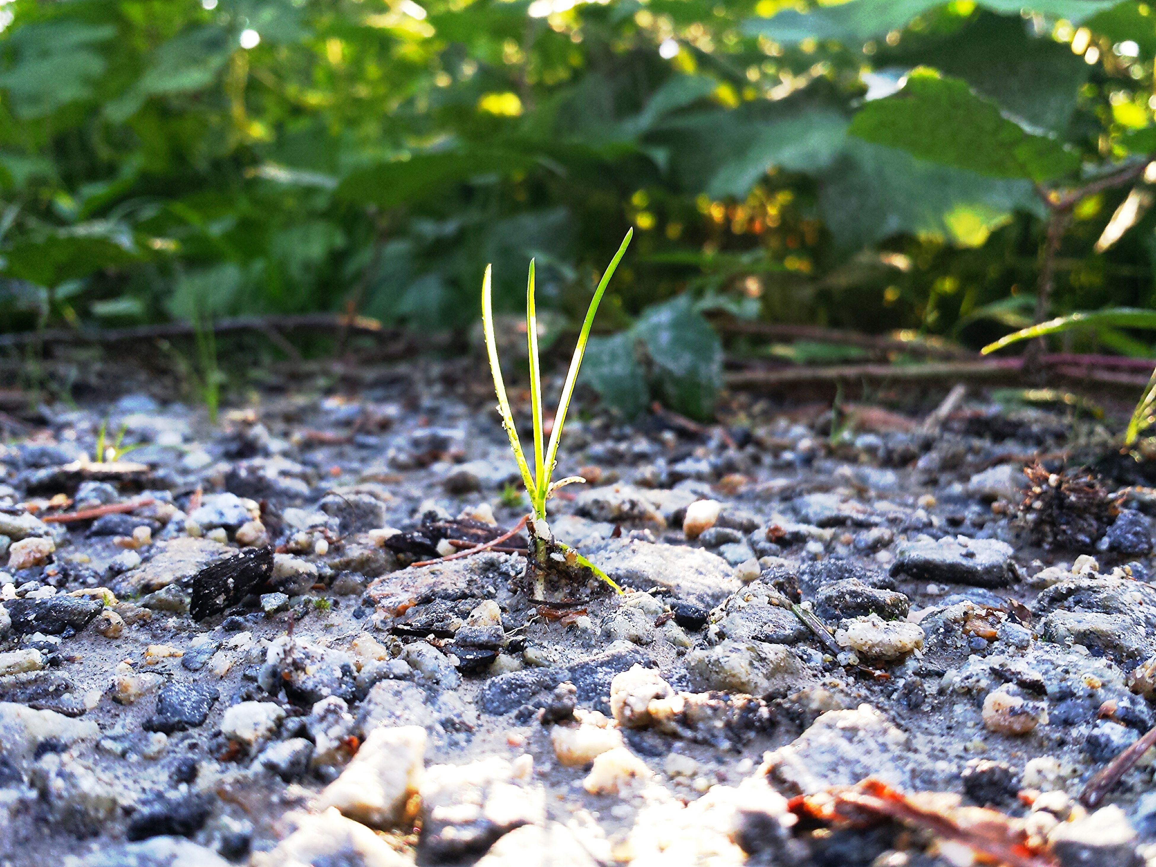 leaf, selective focus, growth, nature, plant, surface level, green color, close-up, tranquility, focus on foreground, rock - object, field, dry, day, ground, outdoors, forest, growing, beauty in nature, stone - object