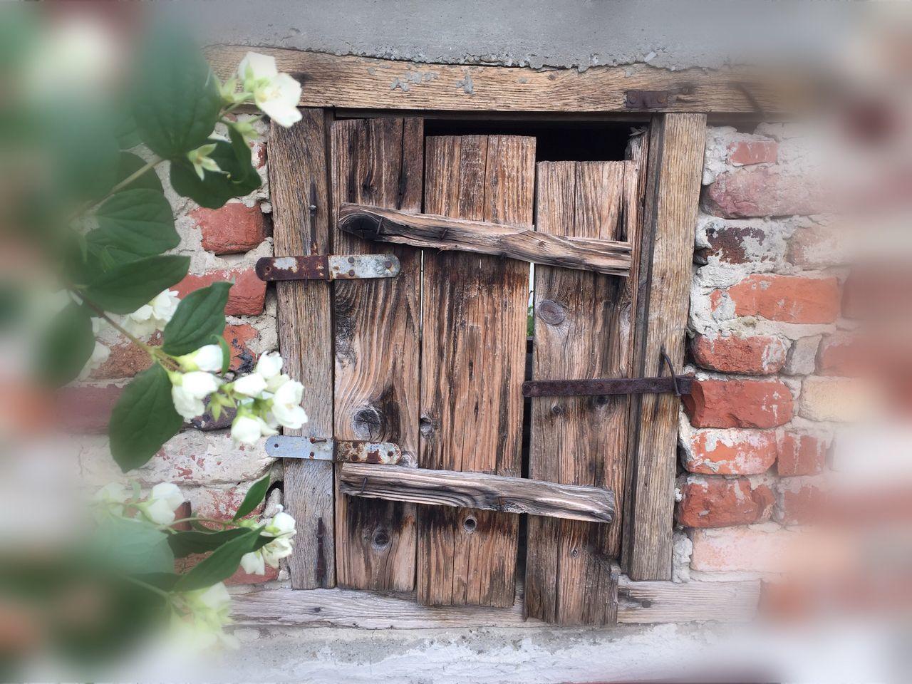 Door Day Wood - Material Outdoors Architecture Flower Leaf Growth Building Exterior Jasmine Flower Windows_aroundtheworld