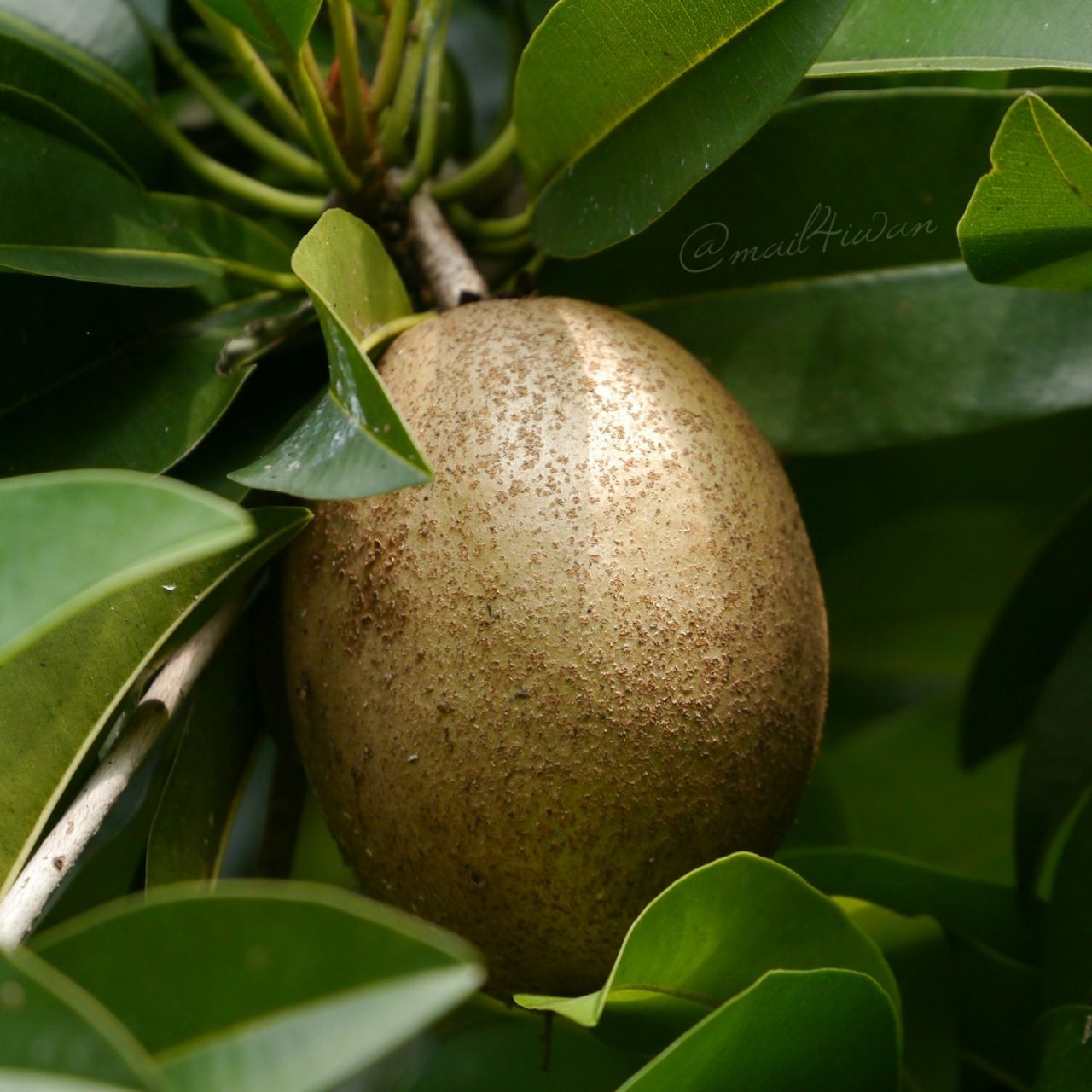 Fruit Freshness Growth Green Color Outdoors Plant Nature Close-up Food Leaf Agriculture Lumix Pure And Untouched (raw Image)