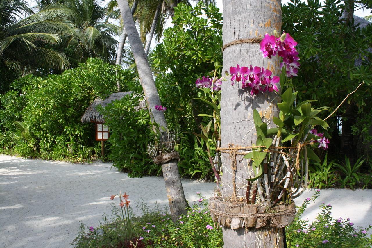 Beautiful stock photos of tropical, Beauty, Bloom, Bole, Exotic