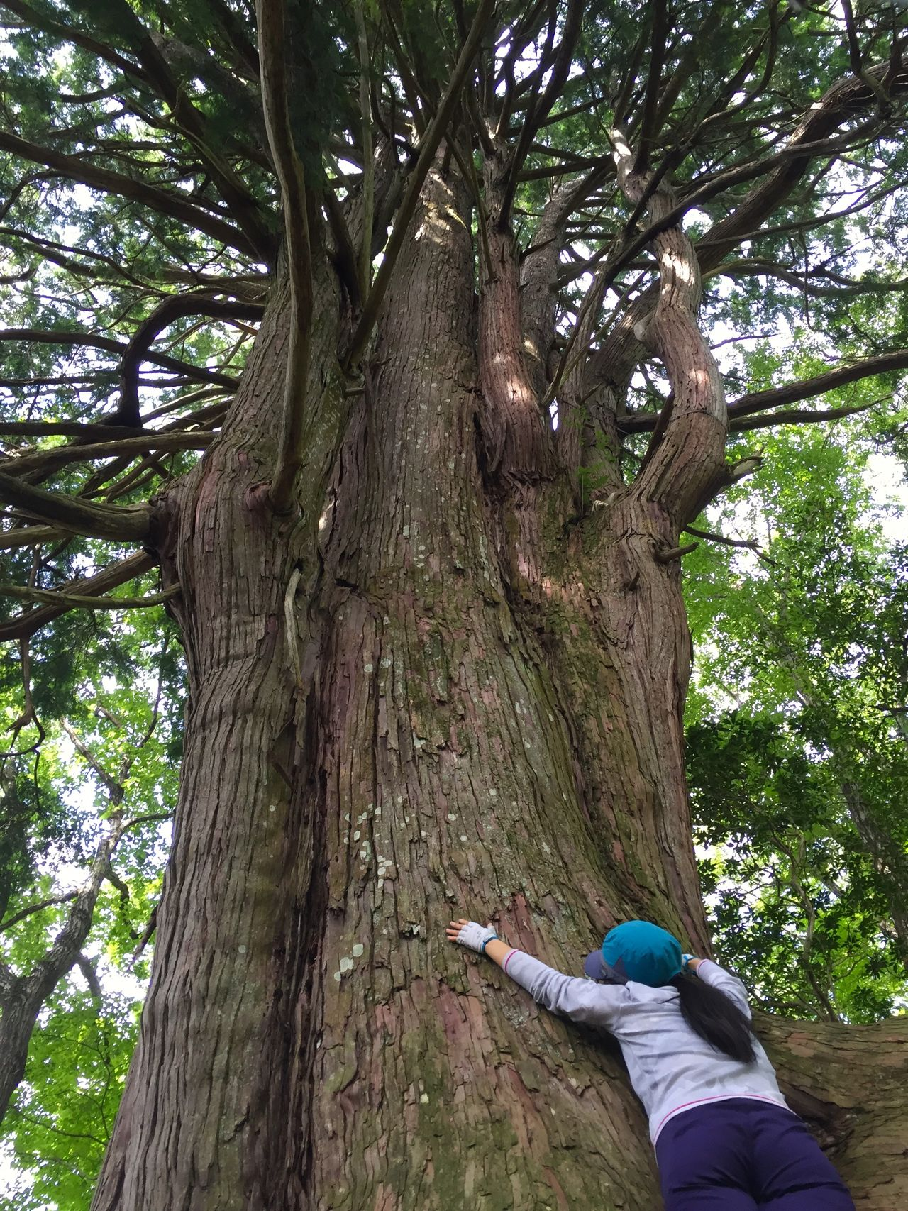 倉沢のヒノキ Kurasawa no Hinoki Hinoki Cedar Trees Forest Nature Nippara Okutama Tokyo Japan