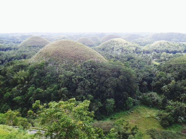 Nature Growth Rural Scene No People Outdoors Agriculture Bohol Island Philippines Chocolatehills