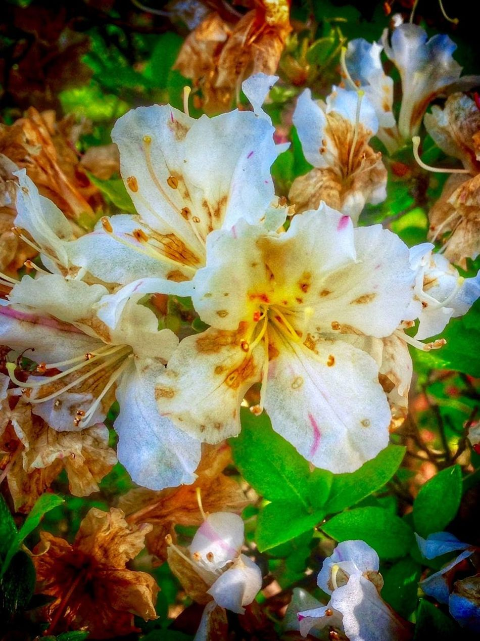 Mother Nature Is Amazing MotherNaturecreates Mothernaturephotography Flower Beauty In Nature Fragility Growth Nature Blossom Petal Freshness Springtime Stamen Botany Flower Head No People Day Outdoors Close-up Plant Branch Tree Saikai City Japan