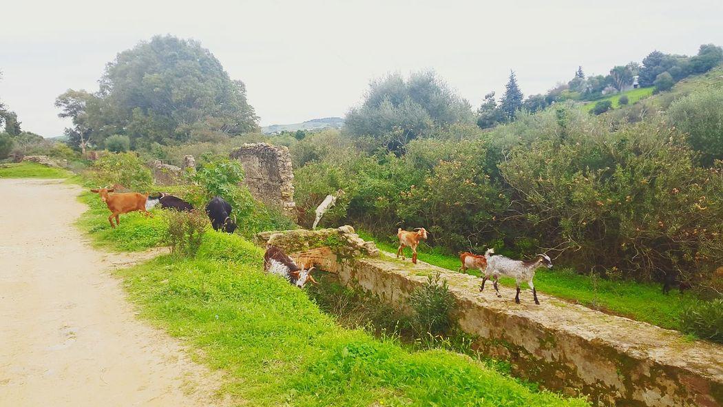 Hikinglife Hiking View Goats Trees Jimena De La Frontera Love Hiking Looking For Adventures Hiking Adventures SPAIN Nature