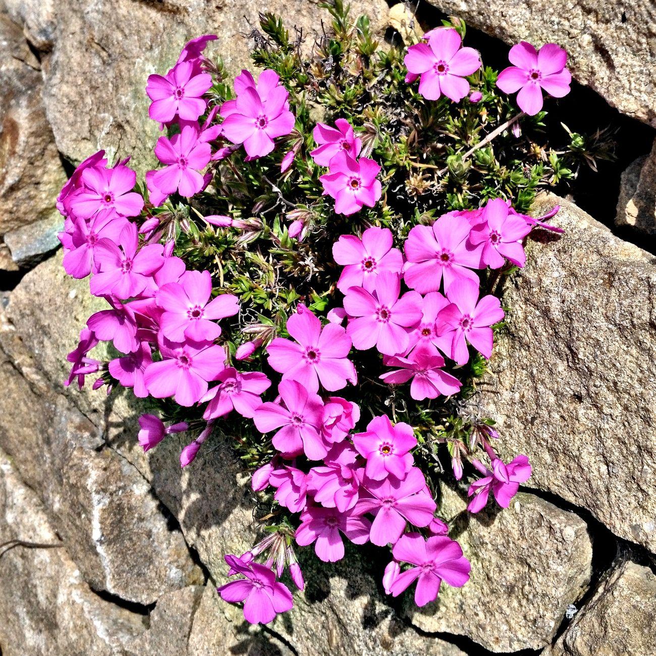 Garden Nature Amazing Flower Plant Amateurphotographer  World Of Color World_nature World Multi Colored