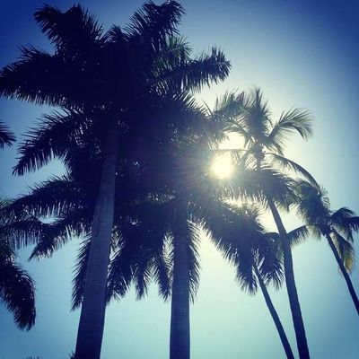 Beach Beauty In Nature Blue Clear Sky Day Florida Growth Low Angle View Nature No People Outdoors Palm Tree Paradise Scenics Sky Summer Tranquility Tree Tree Trunk Tropical Vacations