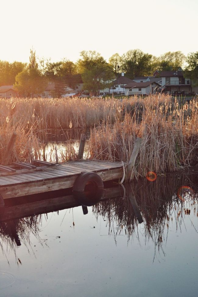 The Great Outdoors - 2016 EyeEm Awards Daytime Golden Hour Cattails Tall Grasses Lake Reflections Dockside Canadian Summer Kenora Ontario Canada Dusk Tranquility Idyllic Scenery Standing Water Rural Scene Beauty In Nature Landscape Waterscape