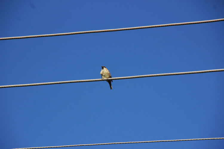 Animal Themes Animal Wildlife Animals In The Wild Bird Clear Sky Nature One Animal Warten...