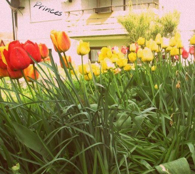 an schönen Tagen mit Freunden im Garten sitzen ist Einfach Das Beste