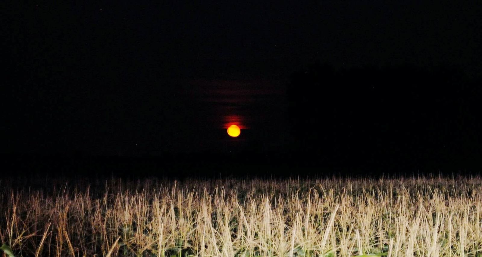 Moon Moonlight Red Red Moon Night Fields Sky Darkness Nikonphotography Nikond3000 Photography Black Beutiful  Nature Nature Beauty