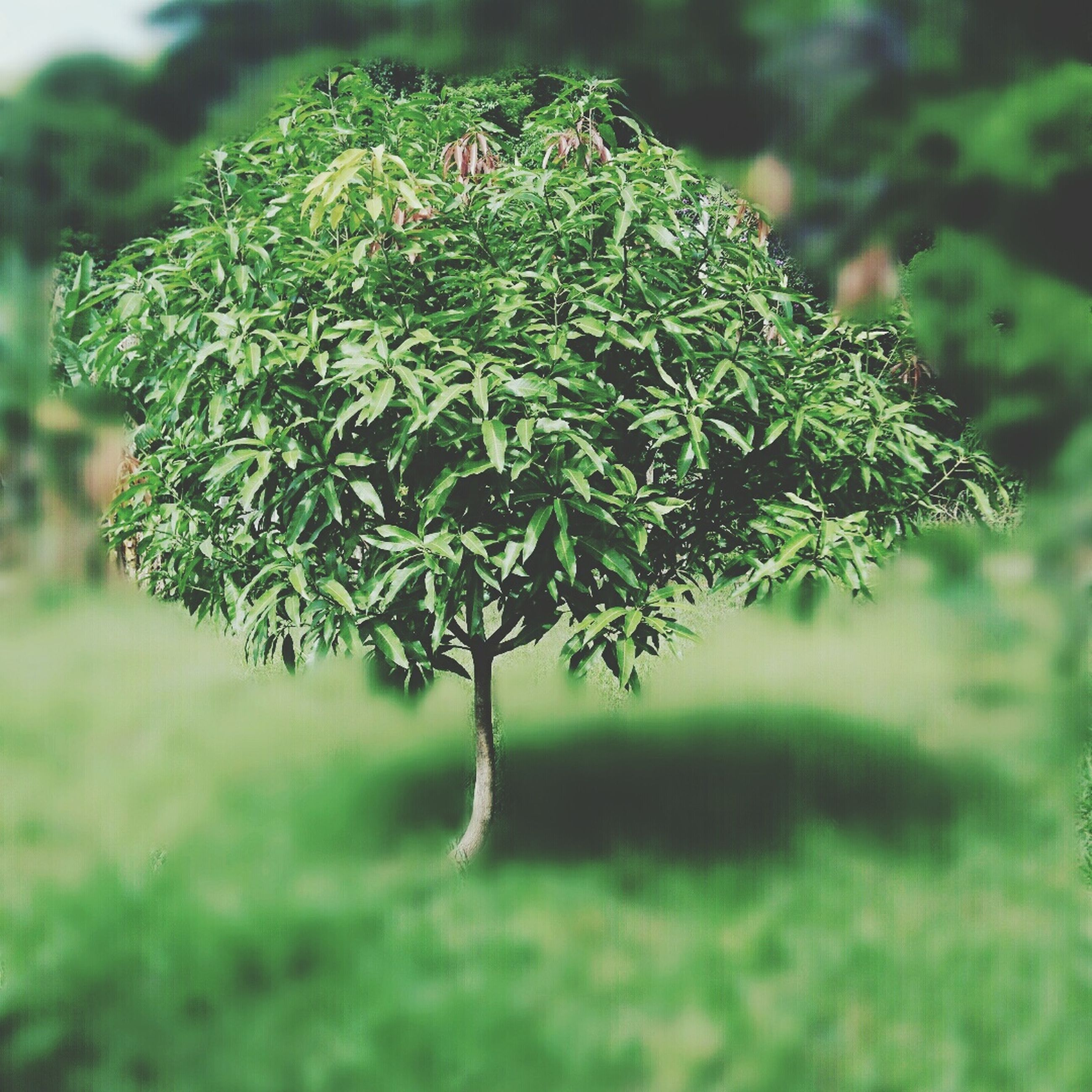 nature, green color, growth, close-up, no people, beauty in nature, outdoors, day, grass, tree