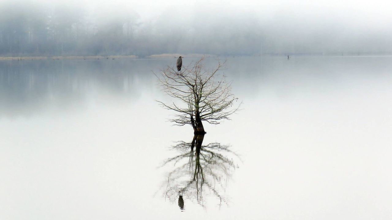 Bare Tree By Lake Against Sky During Winter