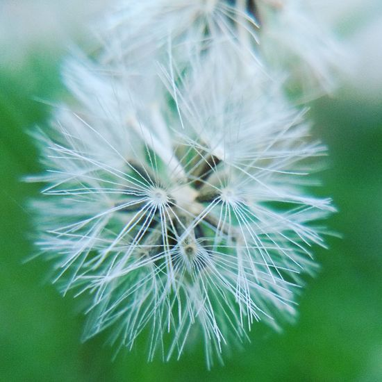 The Great Outdoors - 2017 EyeEm Awards Flower Nature Close-up Beauty In Nature Plant Softness Growth
